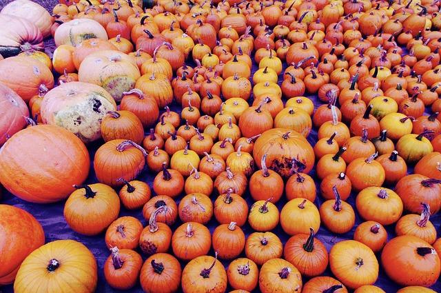 pumpkin-971192_640